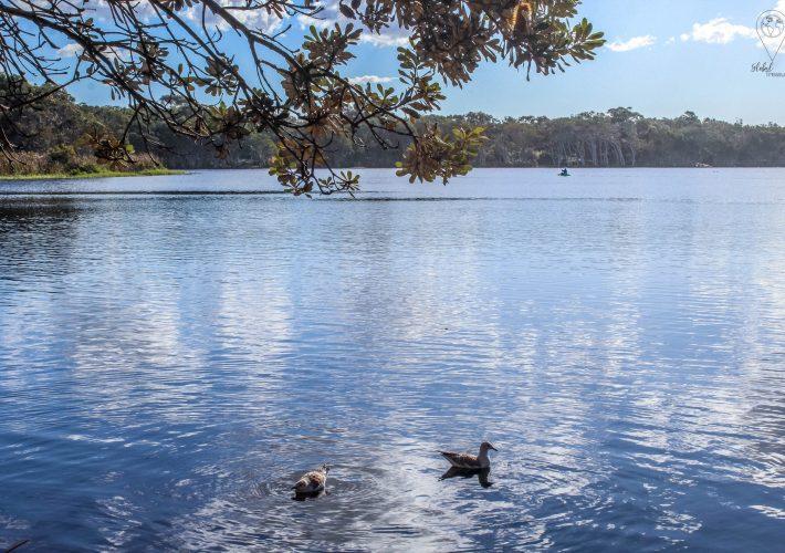 Tea Tree lake en Byron Bay | Global-Treasures.com